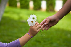 De hand die van het kind bloemen geven aan haar vriend Stock Afbeeldingen