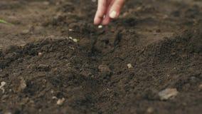 De hand die van de landbouwer een zaad in de grond plant Selectieve nadruk stock video