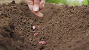 De hand die van de landbouwer een zaad in de grond plant stock videobeelden
