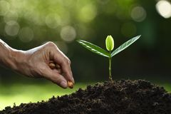 De hand die van de landbouwer zaden in grond op aard planten stock foto's
