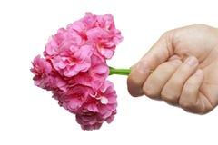 De hand geeft een boeket van bloemen in hartvorm stock afbeelding