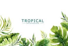 De hand getrokken achtergrond van waterverf tropische installaties Exotische palmbladen, wildernisboom, de tropische borany eleme Royalty-vrije Stock Afbeeldingen