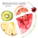 De hand getrokken geplaatste clipart grapefruit k van de waterverfillustratie kiwi stock illustratie