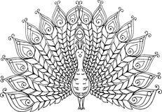 De hand getrokken illustratie van de krabbelpauw Royalty-vrije Stock Afbeeldingen