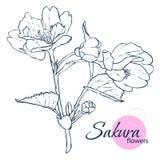 De hand getrokken Japanse bloemen van bloesemsakura Lijn-kunst stijlillustratie Kleurend boek voor volwassene en kinderen stock illustratie