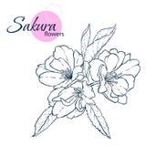 De hand getrokken Japanse bloemen van bloesemsakura Lijn-kunst stijlillustratie Kleurend boek voor volwassene en kinderen vector illustratie