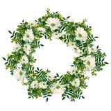 de hand getrokken kroon van de de zomer elegante en romantische grafische bloem met witte kamille Royalty-vrije Stock Foto's