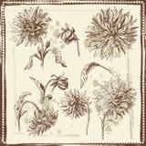 De hand getrokken schets van dahliabloemen Stock Foto's