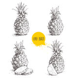 De hand getrokken vastgestelde illustraties van de schetsstijl van rijpe ananassen stock illustratie