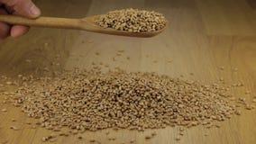 De hand giet snel de tarwekorrels van een houten lepel op een stapel van tarwe stock footage