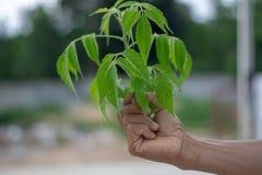 De hand houdt een groene boom Achter het natuurlijke beeld stock fotografie
