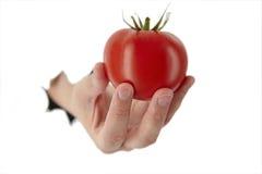 De hand houdt een tomaat royalty-vrije stock afbeeldingen