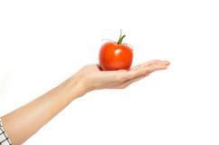De hand houdt tomaat op wit wordt geïsoleerd dat Royalty-vrije Stock Afbeelding
