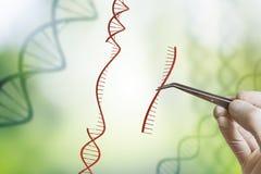 De hand neemt opeenvolging van DNA op Genetische biologie, GMO en het concept van de Genmanipulatie stock foto's