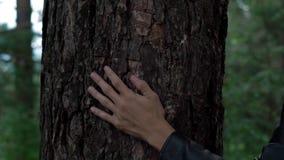 De hand op de boom stock video