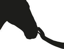 De hand raakt de neus van het paard Stock Afbeeldingen