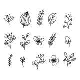 De hand schilderde pictogrambladeren van bomen en struiken, bloeiende bloemen met bloemblaadjes, knoppen en boskruiden Stromende  royalty-vrije illustratie