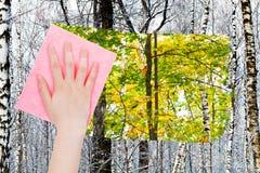 De hand schrapt naakte boomstammen in de winterbos door doek Stock Foto's
