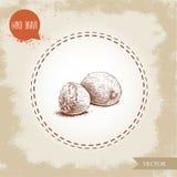 De hand trekt de samenstelling van de schetsstijl nutmegs Kruid en specerij vectorillustratie Stock Afbeeldingen