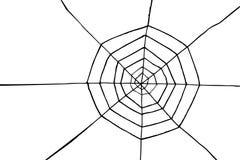 De hand trekt schets, spin en Web Stock Foto's