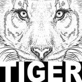 De hand trekt tijgerportret Extreme sporttent Stock Afbeelding