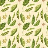 De hand van de avocadowaterverf trekt geïsoleerde illustratie op witte achtergrond Naadloos patroon van hand getrokken avocado stock illustratie