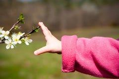 De hand van de baby wat betreft de lentebloesem Stock Fotografie