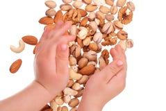 De hand van de kinderen houdt noten Stock Foto's