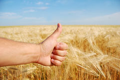 De hand van de landbouwer symboliseert de O.K. oogst van dit jaar royalty-vrije stock fotografie