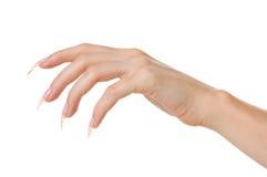 De hand van de vrouw Stock Foto