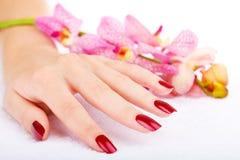 De hand van de vrouw met roze orchidee Stock Foto's