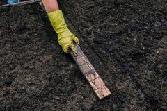 De hand van een vrouw in een handschoen meet de afstand voor het planten van jonge planten in de grond In de handen van de houten stock foto's
