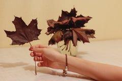 In de hand van het blad van de esdoornherfst Een aantal banken met de herfst Royalty-vrije Stock Fotografie
