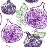De Hand van het fig.fruit trekt Schets Achtergrondpatroon Vector Stock Afbeeldingen
