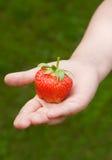 De hand van het kind met aardbeien Stock Fotografie