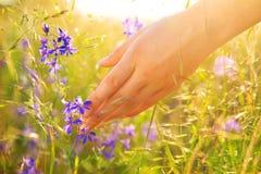 De hand van het meisje wat betreft wildflowers stock fotografie