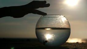 De hand van het silhouetlichaamsdeel raakt teder vingersronde fishbowl met vissen op oceaanachtergrond bij zonsondergang stock footage