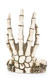 De hand van het skelet. Stock Foto