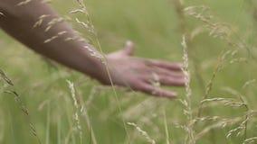 De hand van landbouwer raakt gewassen in de herfstdaling, close-up van bedrijfsmedewerker het controleren stock footage