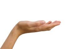 De hand van vrouwen Stock Foto