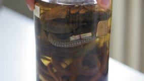 De hand van wetenschapper draait steekproef van verschillende slangen in reageerbuis dichte omhooggaand stock footage