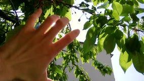 De hand vangt de zon stock video