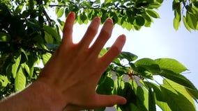 De hand vangt de zon stock videobeelden