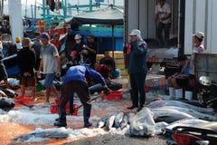 De handel van tonijnvissen bij de vissenhaven van Qui Nhon, Vietnam Stock Foto