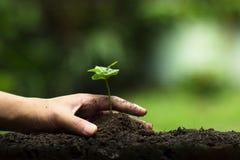 De handen beschermen bomen, installatiebomen, handen op bomen, liefdeaard Royalty-vrije Stock Afbeeldingen