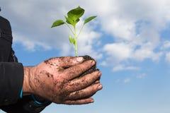 De handen die van de mens een groene jonge installatie houden Symbool van de lente en ecol Stock Fotografie