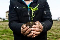 De handen die van de mens een groene jonge installatie houden Symbool van de lente en ecol Royalty-vrije Stock Foto