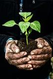 De handen die van de mens een groene jonge installatie houden Symbool van de lente en ecol Royalty-vrije Stock Afbeelding