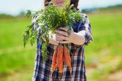 De handen die van de vrouw verse rijpe organische wortelen houden Royalty-vrije Stock Afbeelding
