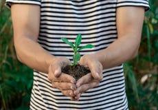 De handen die van het ecologieconcept installatie houden een boomjong boompje met op grond stock afbeeldingen